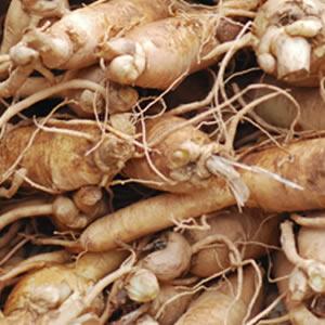 Ginseng Blanc Bio certifié agriculture biologique