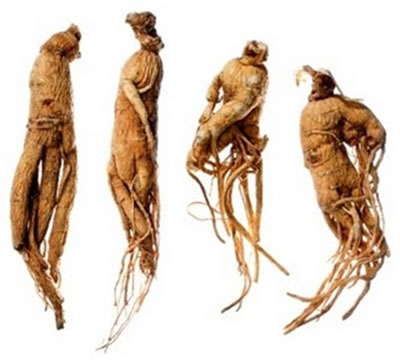 Ginseng Blanc Bio certifié Ecocert racine à vaporise
