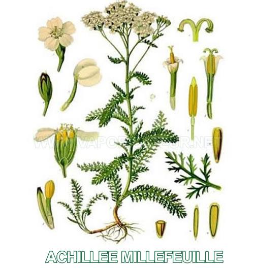 Achillée Millefeuille Bio feuilles séchées issues d'agriculture biologiques - meilleur pour la vaporisation