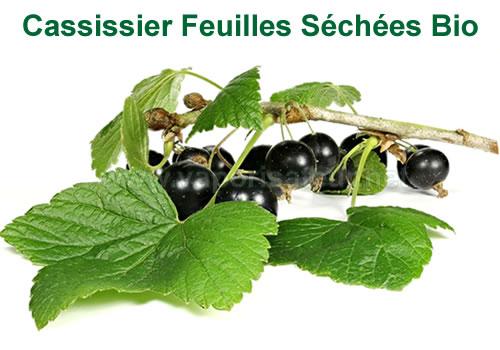 Cassissier - image de la feuille bio avec le fruit