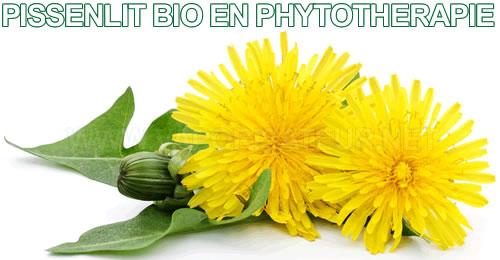 Feuilles séchées du Pissenlit Bio en phytothérapie avec un vaporisateur