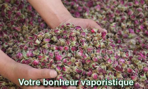 Rose De Damas Bio Vaporiser Plante Medicinale Certifiee 100